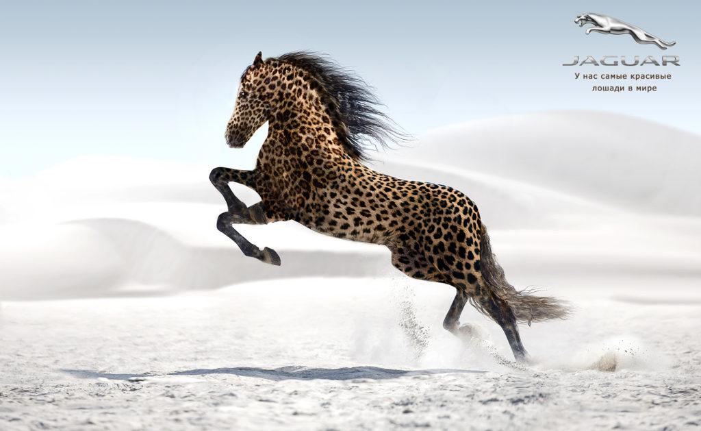 jaguarw